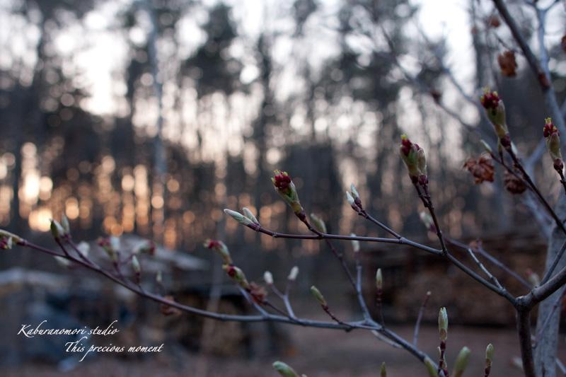 木々の葉や草花がやっと綻びはじめたこの頃_c0137403_1856640.jpg