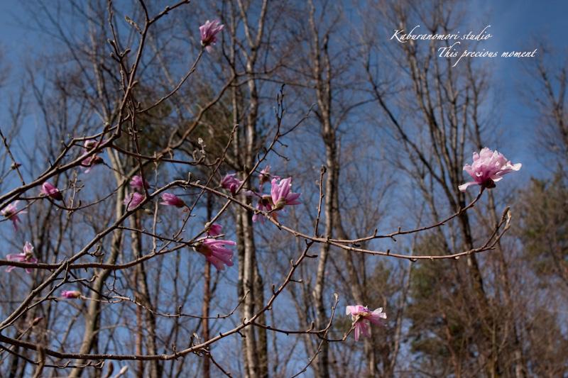 木々の葉や草花がやっと綻びはじめたこの頃_c0137403_18574963.jpg