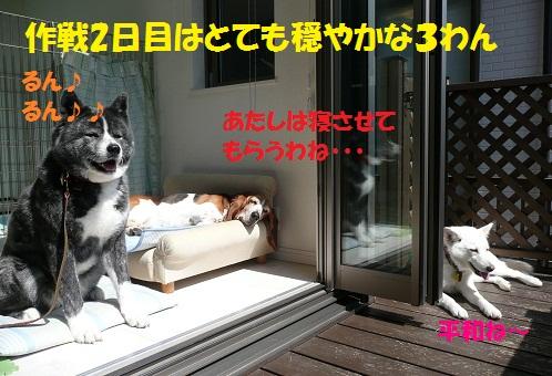 f0121712_2320976.jpg
