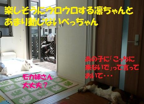 f0121712_23221830.jpg