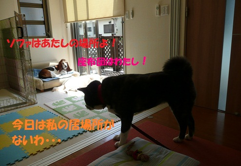 f0121712_23245264.jpg
