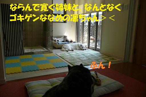 f0121712_23252819.jpg