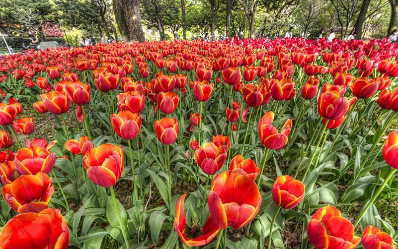 よこはま花と緑のスプリングフェア2011_c0214542_21543389.jpg