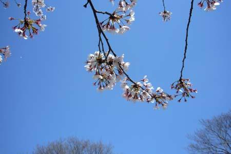 春・・・ですね♪_f0105054_751139.jpg