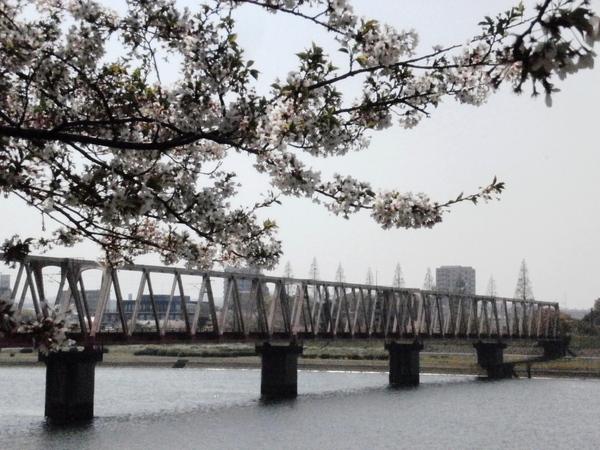 なごり桜^^_a0174458_9161960.jpg