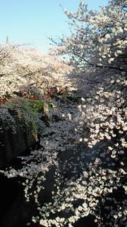 桜終わっちゃったけど!_b0105458_17442057.jpg