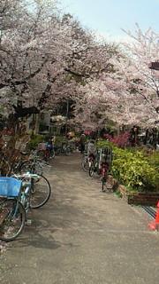 桜終わっちゃったけど!_b0105458_17451319.jpg