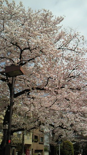 桜終わっちゃったけど!_b0105458_17455676.jpg