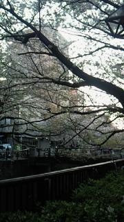 桜終わっちゃったけど!_b0105458_1746297.jpg