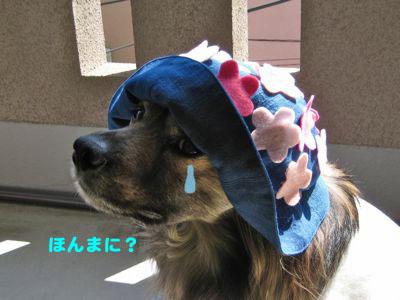 背中の桜_a0119263_2155667.jpg