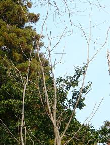 野呂山頂、まだ浅き春_e0175370_2234381.jpg