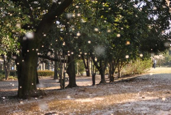 花びら舞う公園_b0194880_13394329.jpg