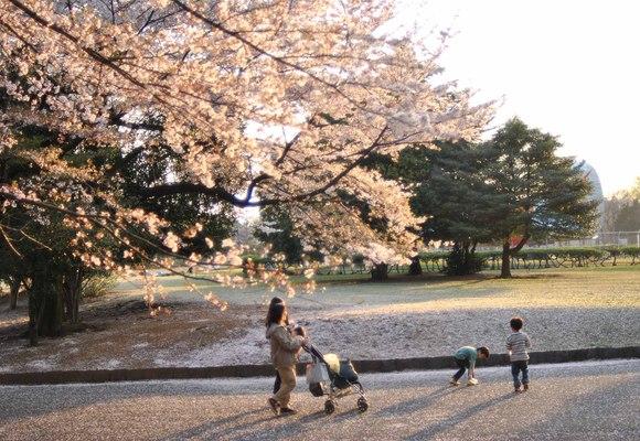 花びら舞う公園_b0194880_1341378.jpg