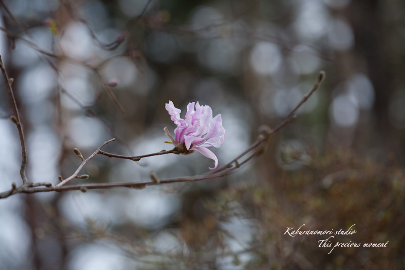 木々の葉や草花がやっと綻びはじめたこの頃_c0137403_21017100.jpg