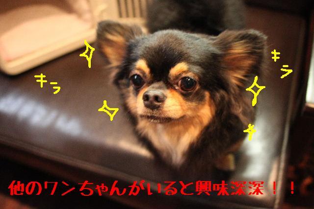 b0130018_18274143.jpg