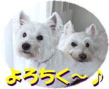 f0084422_20131623.jpg