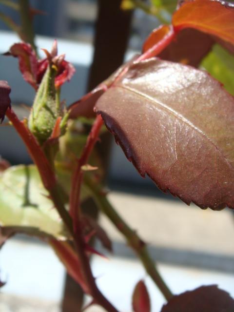 芽吹きに開花、、ケヤキショック_a0137727_21585349.jpg