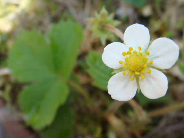 芽吹きに開花、、ケヤキショック_a0137727_21591599.jpg
