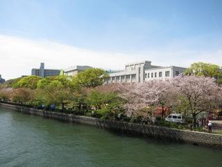 桜 さくら_d0010432_16444817.jpg