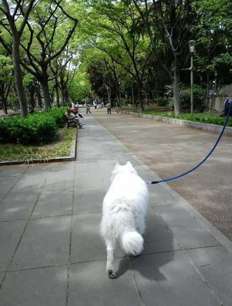 うつぼ公園ブラブラ_e0052736_2122154.jpg