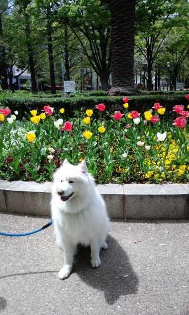 うつぼ公園ブラブラ_e0052736_2231553.jpg