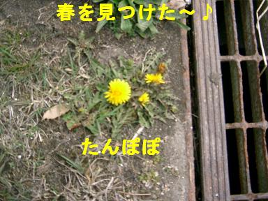 c0212637_213676.jpg