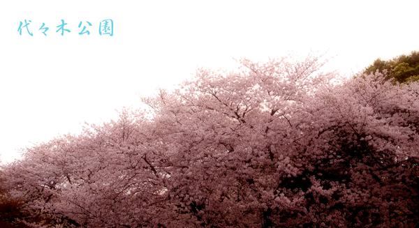 f0153646_1965242.jpg