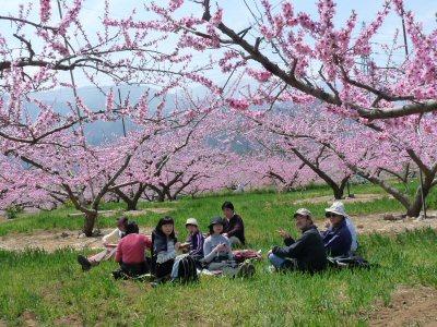 新府の桃は満開です♪_f0019247_23562163.jpg