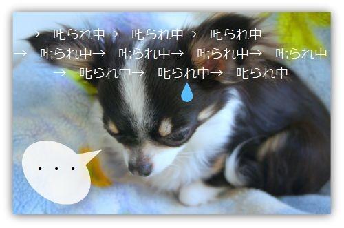 b0112758_18413544.jpg