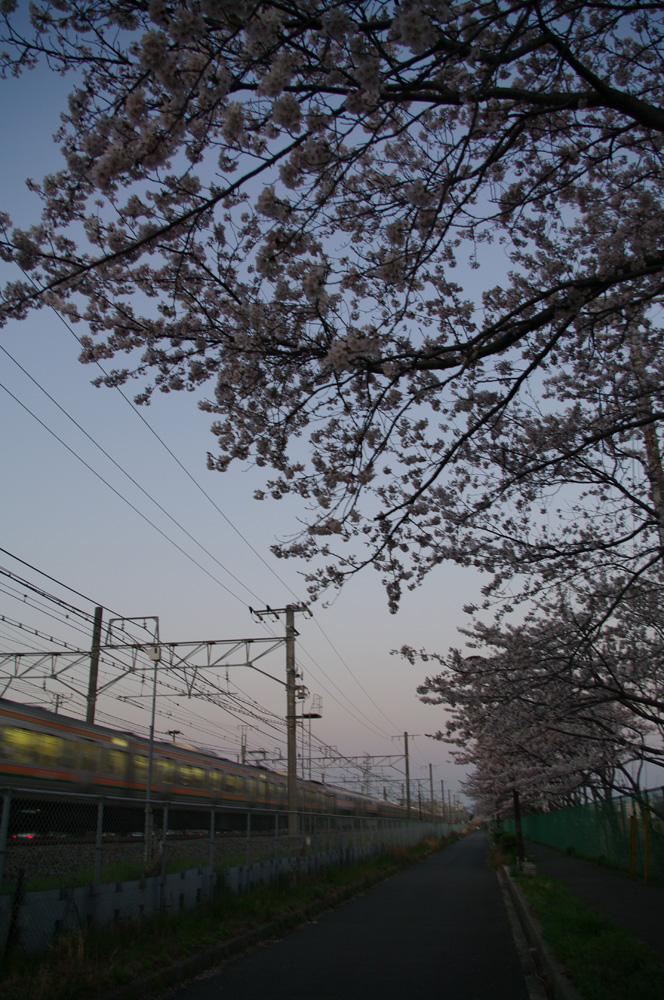 082- 桜2011.4.13_f0183059_18353243.jpg