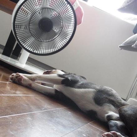 暑い_d0197969_2191563.jpg