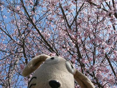 わんこの春爛漫_c0158573_13435494.jpg