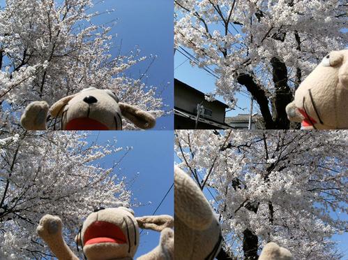 わんこの春爛漫_c0158573_13443126.jpg