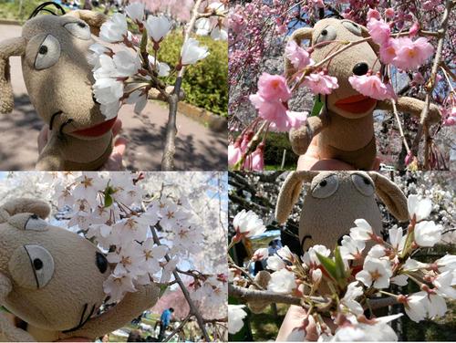 わんこの春爛漫_c0158573_13502078.jpg