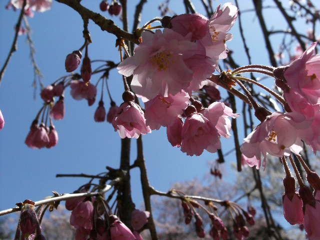 わんこの春爛漫_c0158573_13503893.jpg