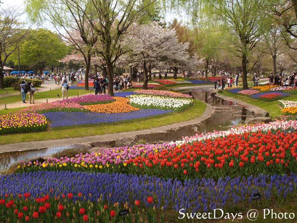 菜の花畑でピクニック!_e0046675_22142059.jpg