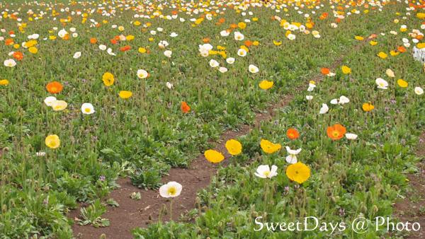 菜の花畑でピクニック!_e0046675_22143471.jpg