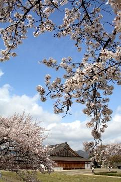 篠山城、桜を見ながら歴史探訪_b0067283_17373742.jpg