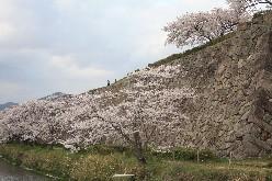 篠山城、桜を見ながら歴史探訪_b0067283_17521618.jpg