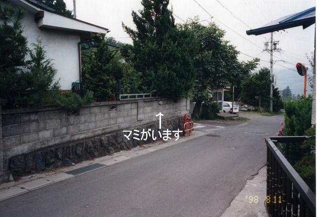 f0169884_108891.jpg