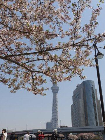 今年最後の桜、名残を惜しみながら桜の下をぶらぶら。。。私の季節が終わっちゃうよ~_b0175688_11411150.jpg