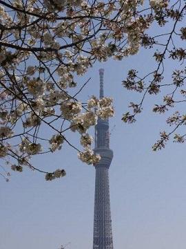 今年最後の桜、名残を惜しみながら桜の下をぶらぶら。。。私の季節が終わっちゃうよ~_b0175688_1213429.jpg