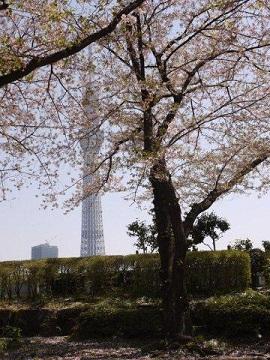 今年最後の桜、名残を惜しみながら桜の下をぶらぶら。。。私の季節が終わっちゃうよ~_b0175688_1214764.jpg