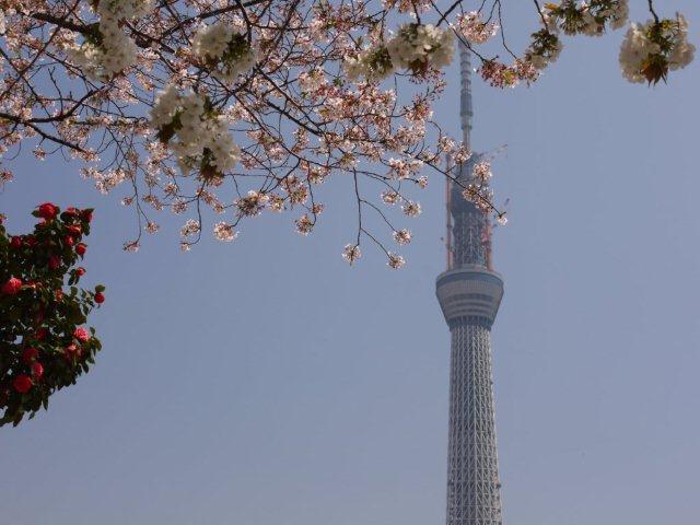 今年最後の桜、名残を惜しみながら桜の下をぶらぶら。。。私の季節が終わっちゃうよ~_b0175688_1225392.jpg