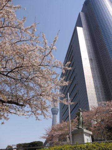 今年最後の桜、名残を惜しみながら桜の下をぶらぶら。。。私の季節が終わっちゃうよ~_b0175688_1262622.jpg