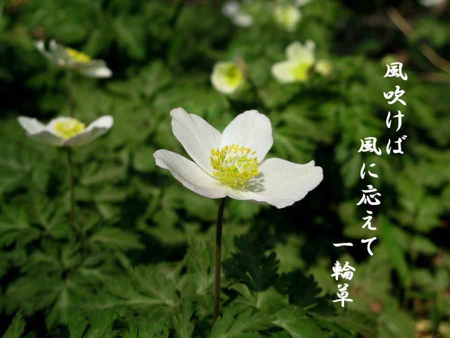f0137096_136559.jpg
