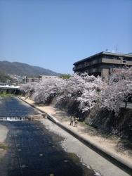 芦屋川のさくら_c0182100_14341921.jpg