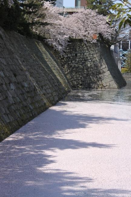 【江のゆかり福井県】春の川 ただし、お堀ですけどw_f0229508_11364614.jpg