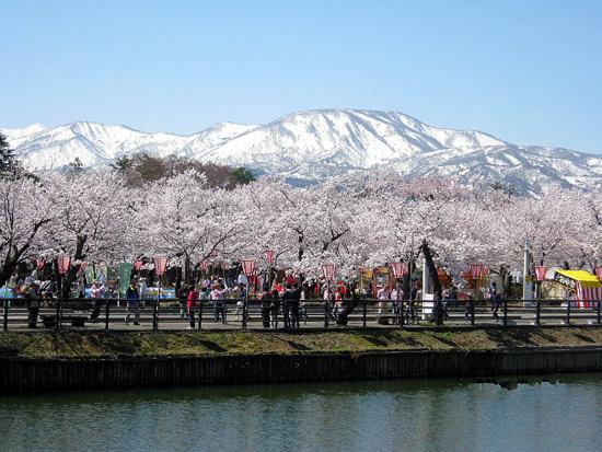 高田公園の桜(新潟県上越市)_d0066822_13512252.jpg