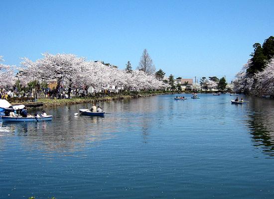 高田公園の桜(新潟県上越市)_d0066822_13535766.jpg